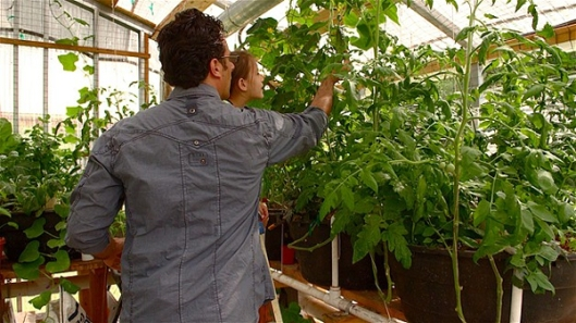 Inspecting the Aquaponic Food Production System