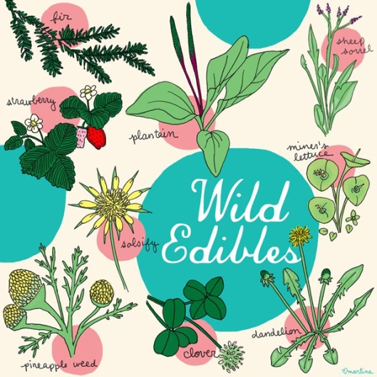 Wild Edibles Graphic